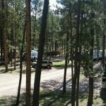 Big Pine Campground in Custer South Dakota offers tent camping, RV sites and cabin rentals